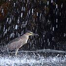 Fishing the Falls by Dennis Stewart