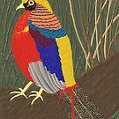 Golden Pheasant by DebiCady