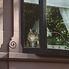 Back Bay Feline by Bethany Helzer