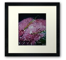 Turkey Bush Framed Print