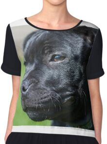 Staffordshire bullterrier puppy Women's Chiffon Top