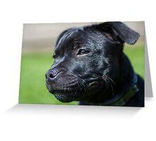 Staffordshire bullterrier puppy Greeting Card