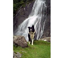 Indy at Aber Falls Photographic Print