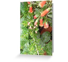 Grevillea, correa and native orchids  Greeting Card