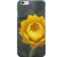 sticky everlasting daisy iPhone Case/Skin