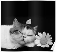 Cutie Cat's Sweet Dream, pet, black white Poster