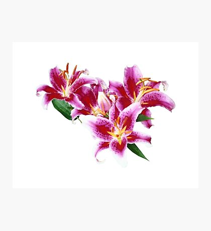 Stargazer Lily Heart Photographic Print
