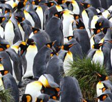 King Penguin Rookery Sticker