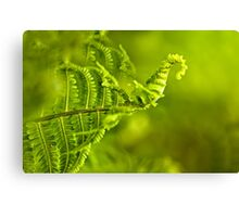 a young green fern growing in forest Canvas Print