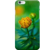 Trollius europaeus. Flowering globe flowers.  The Bush of the globe on the background of forest meadows covered with flowers. iPhone Case/Skin