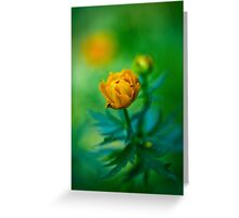 Trollius europaeus. Flowering globe flowers.  The Bush of the globe on the background of forest meadows covered with flowers. Greeting Card