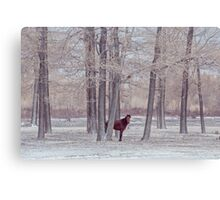 lonely horse in front of snowy winter forest Canvas Print