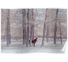lonely horse in front of snowy winter forest Poster