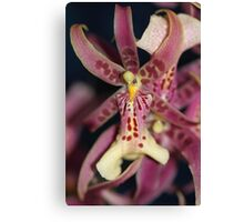 Splendid Orchid in Macro Canvas Print