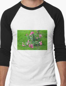 Pink roses in the garden. Men's Baseball ¾ T-Shirt