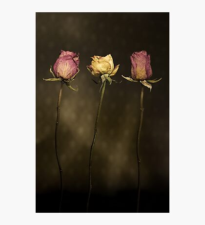 3 Roses Photographic Print