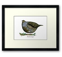 Partridge - tony fernandes Framed Print