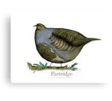 Partridge - tony fernandes Canvas Print