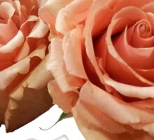 Two Peach Roses Sticker