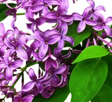 Lilacs and Leaves Sticker