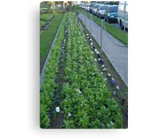 Pansies, Posts and Parked Cars Canvas Print