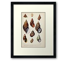 Proceedings of the Zoological Society of London 1848 - 1860 V5 Mollusca 051 Framed Print