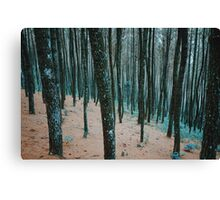 Morning Walk in a Forest Canvas Print