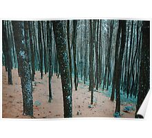 Morning Walk in a Forest Poster