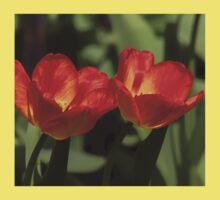 Fiery Tulips One Piece - Short Sleeve
