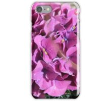 Hydrangea Blossoms In Violet iPhone Case/Skin