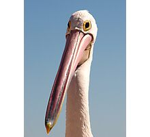 Pelican just fits the bill :-) Photographic Print