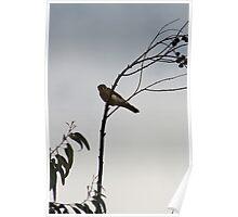 American Kestrel on a Branch Poster
