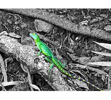 Colorized Lizard Photographic Print