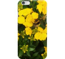 Bumble Bee In Yellow Flowers iPhone Case/Skin