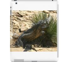 Canyonlands 24 iPad Case/Skin