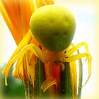 Yellow Crab Spider by ©The Creative  Minds