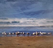 Seagulls Resting ~ Imperial Beach, California ~ USA by Marie Sharp