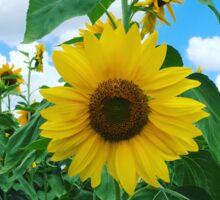 Sunflower Maze I Sticker