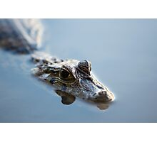 Caiman in still water at Madidi in Bolivia Photographic Print