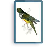 Green and Yellow Parrot Metal Print