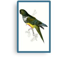 Green and Yellow Parrot Canvas Print