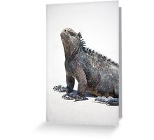 Marine iguana in the Galapagos islands Greeting Card