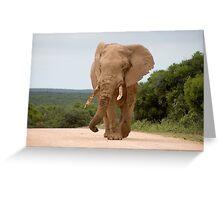 Elephant in Addo Park Greeting Card