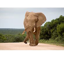 Elephant in Addo Park Photographic Print