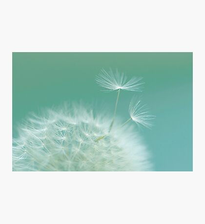 Green Dandelion Photographic Print