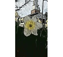 Easter Daffodil Photographic Print