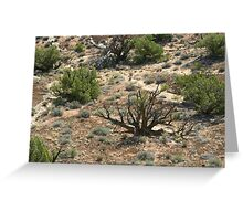 Canyonlands 52 Greeting Card