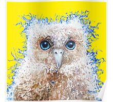 Baby Owl on yellow background Poster
