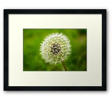 subtle geometry of nature Framed Print