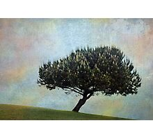 The candle tree Photographic Print